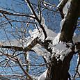雪のリンゴ園