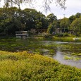 柿田川の清流3