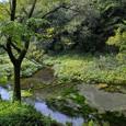 柿田川の清流2
