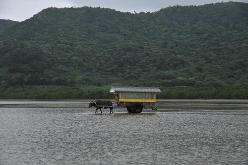 海を渡る水牛車